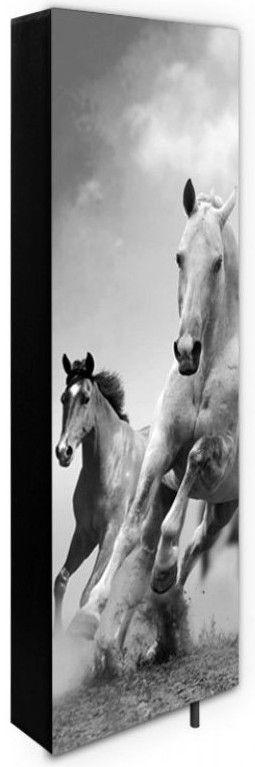 konie 1